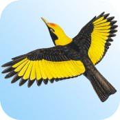 techniques-iphone-birdsaustralia
